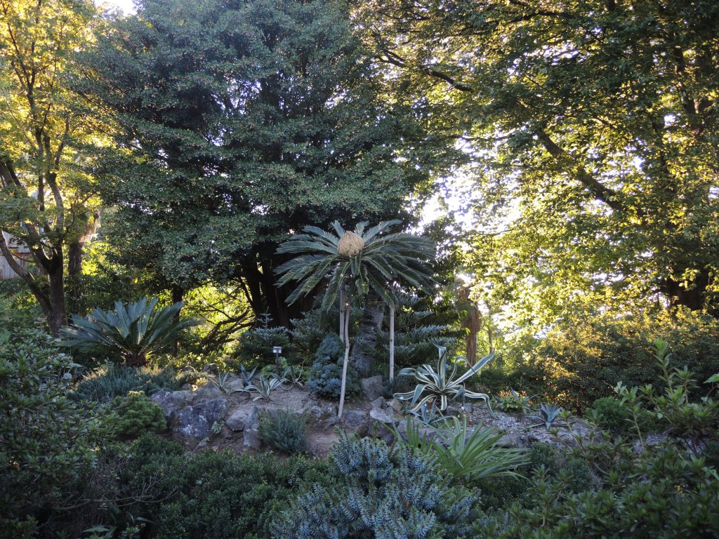 Батумский Ботанический Сад