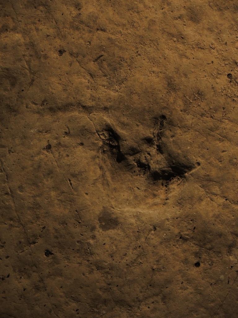 Сатаплийский заповедник. Окаменелые следы динозавров