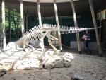 Сатаплийский заповедник. Настоящий скелет динозавра