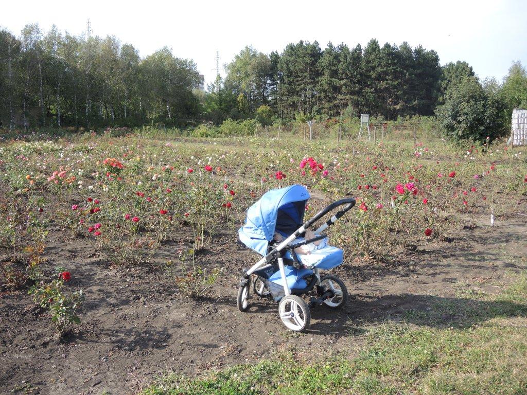 Ботанический сад в Ставрополе