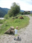 река Молдовита, Максим охотится за коровами
