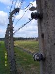 Польша. Освенцим - 2. Везде была натянута колючка под напряжением. Она и сейчас рабочая, надо только включить нужный рубильник, и....