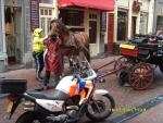 Голландия. Амстердам. Полицай помогает лошади.