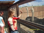 Иринка дразнит страусов