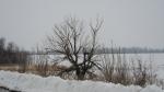 Обугленное дерево.