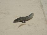 Рыба - змееголов