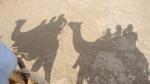 Бафк. Катание на верблюдах