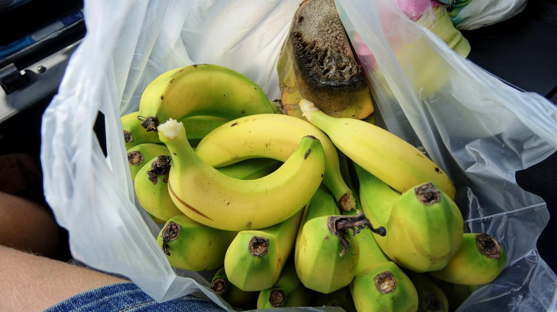 Бананы с дерева. Не вкусные