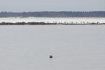 Беломорский порт. Морской заяц